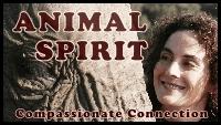 Animal Spirit-2