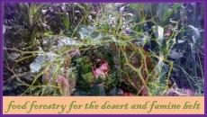 Food Forestry Training Program2
