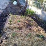 grow-your-own-food-step-3-digging-a-trench-bed
