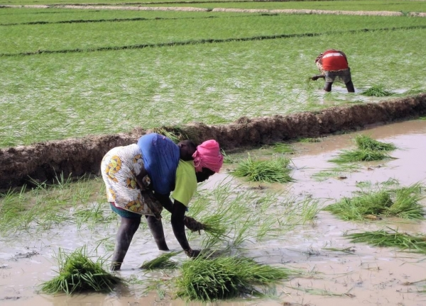 new-seed-legislation-spells-disaster-for-small-farmers