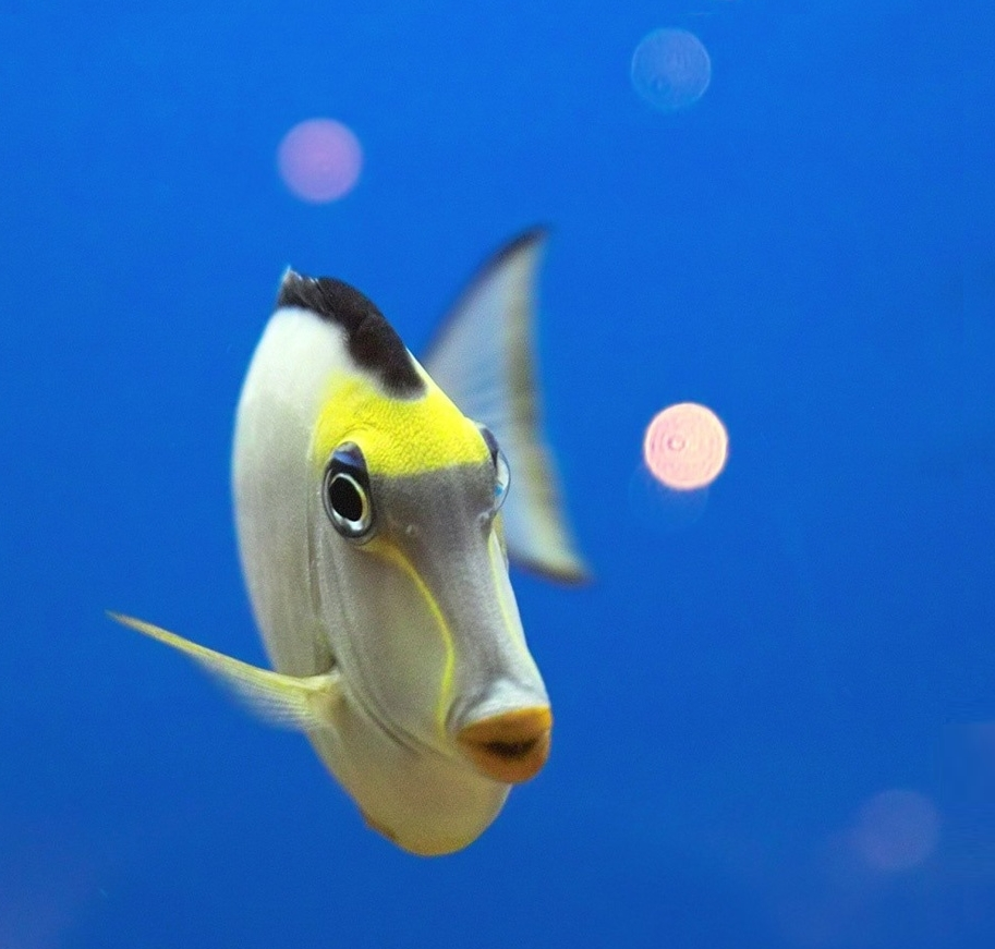underwater ocean fish2