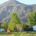 bringing-sustainability-back-to-greyton
