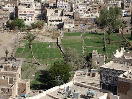 Ancient Urban Food Gardens of Yemen2