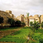 the-ancient-urban-food-gardens-of-yemen