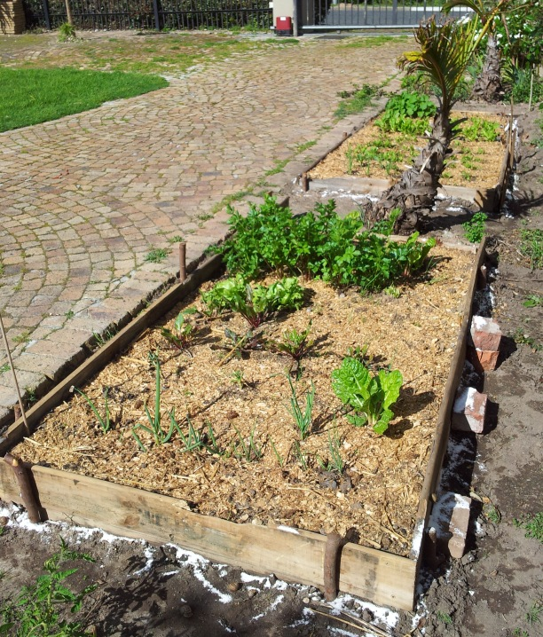 green garden2