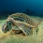 solutions-urgently-needed-for-marine-debris-dilemmas