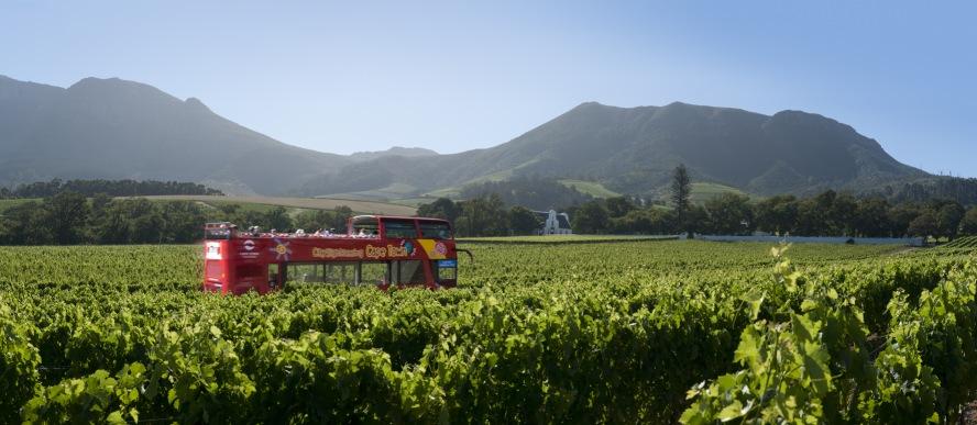 Cape Town Blue Mini Peninsula Tour