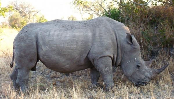 limpopo-police-arrest-3-suspected-rhino-poachers