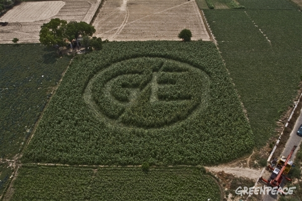 Greenpeace crop circles GM bill India2