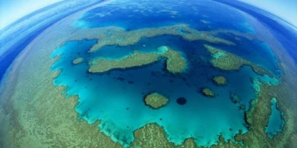 an-urgent-threat-to-the-great-barrier-reef