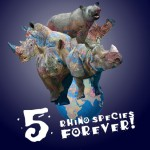 celebrate-african-and-asian-rhinos-next-month