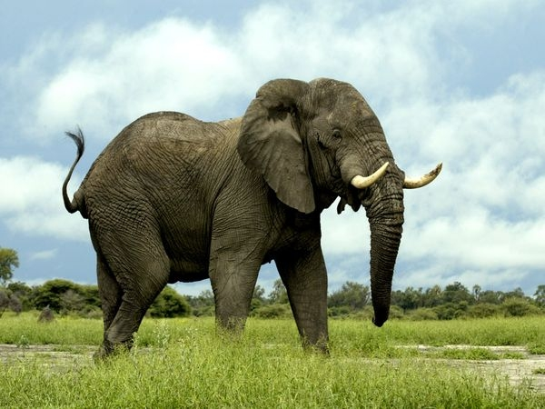 is-this-our-last-chance-to-save-the-elephants?