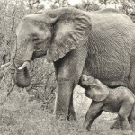 Not enough being done to fight elephant poaching
