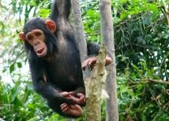 cameroon plantation palm oil chimps greenpeace2