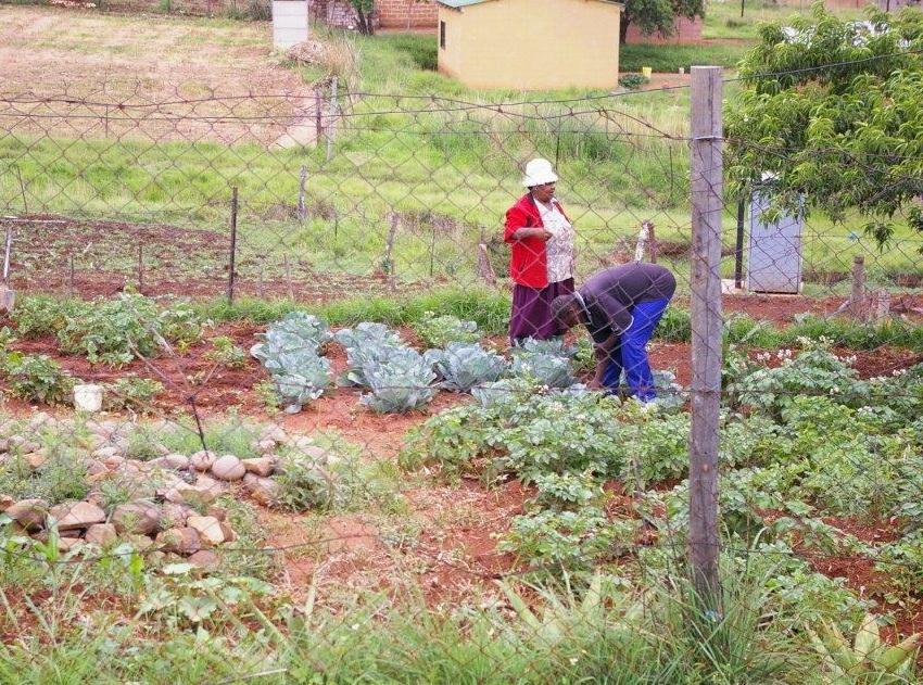 veggie gardens