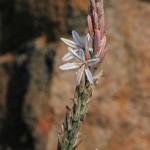 wild-about-weeds-part-1-veldkool