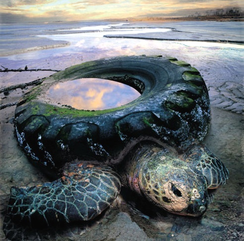 coastal-clean-up-day-radial-turtle2