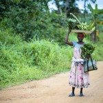 forests-and-food-in-africa