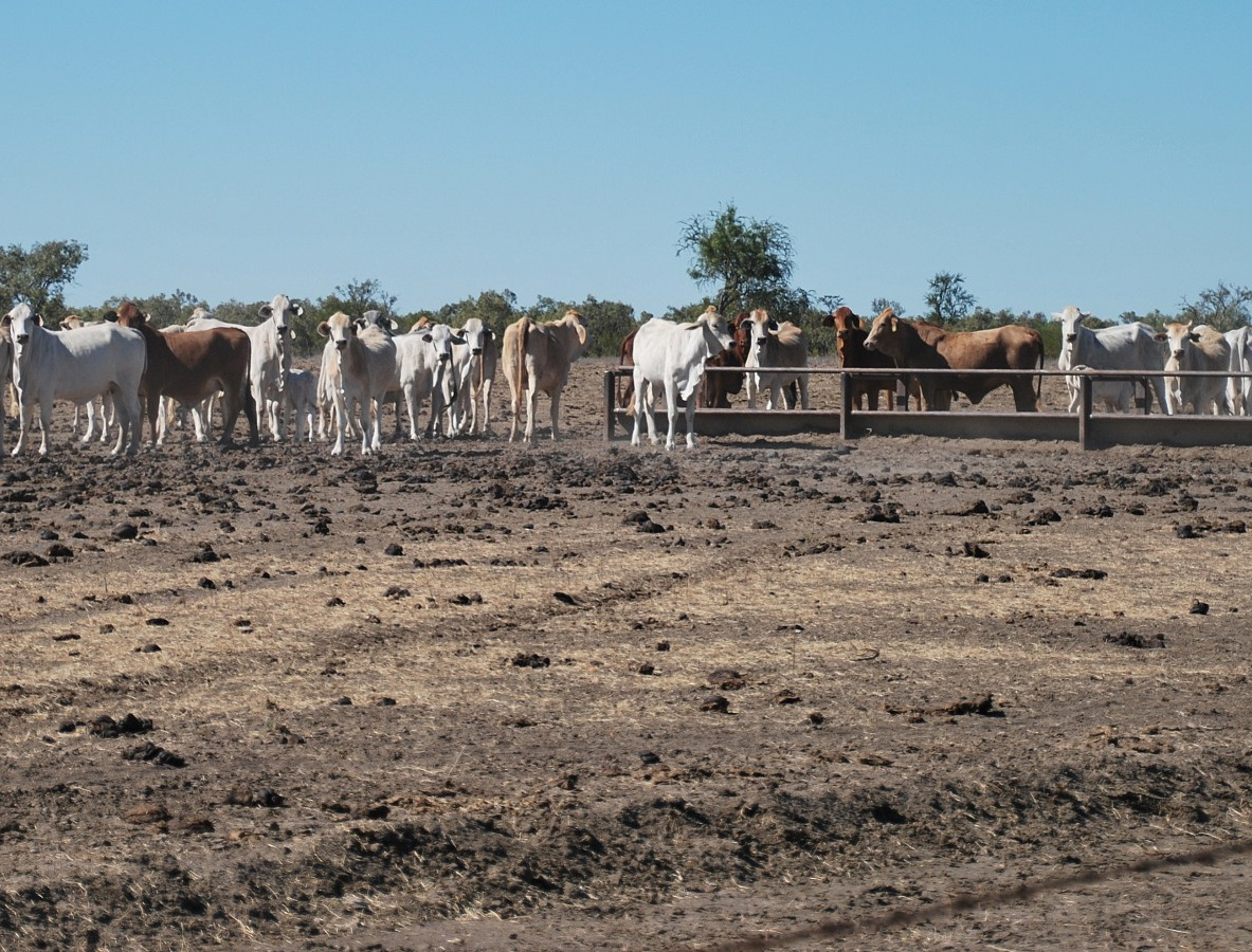 australia beef water shortages2d