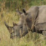 Mozambique's Chissano starts campaign to end poaching