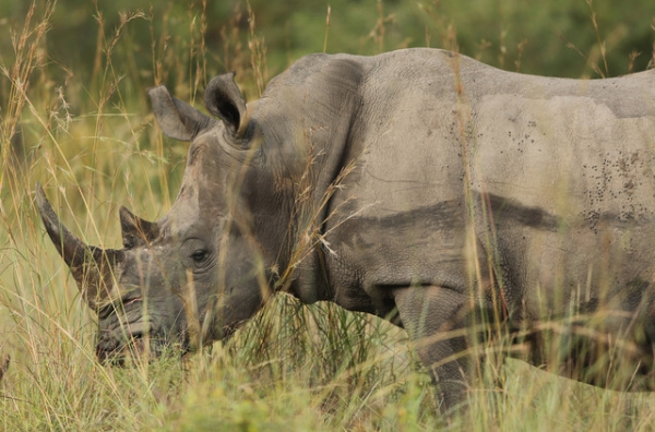 mozambique's-chissano-starts-campaign-to-end-poaching