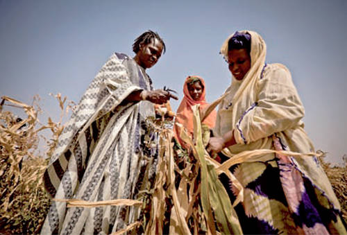 Farmers Aissat Abduljub and Habiba Wellba show Senegalese singer Baaba Maal their failed crops. The maize has gone dry and is inedible. © Pablo Tosco/Oxfam International