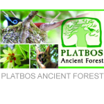 Platbos Ancient Forest