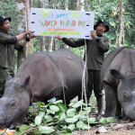 How was 2013 for Asian Rhinos?