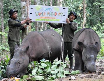 SumatranRhinos