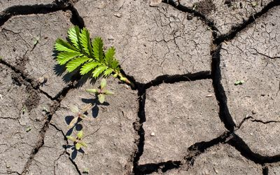 leaf grows through the cracks