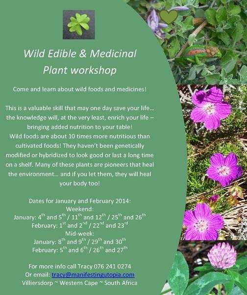 medicinal plant workshops 2014