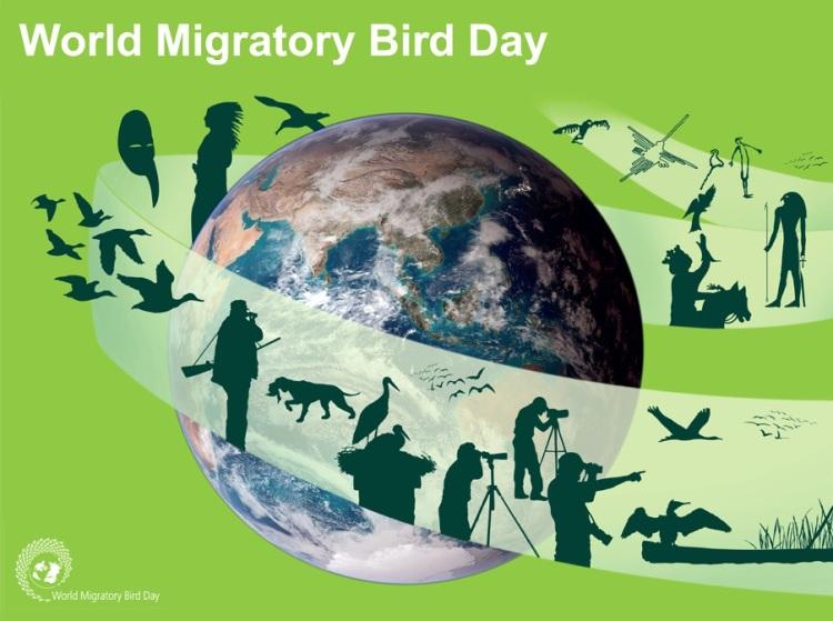 International Migratory Bird Day