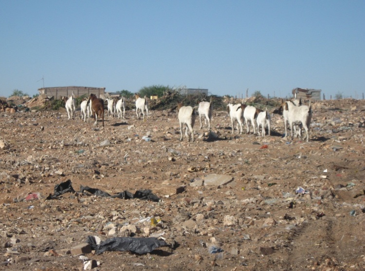 Northern Cape drought3