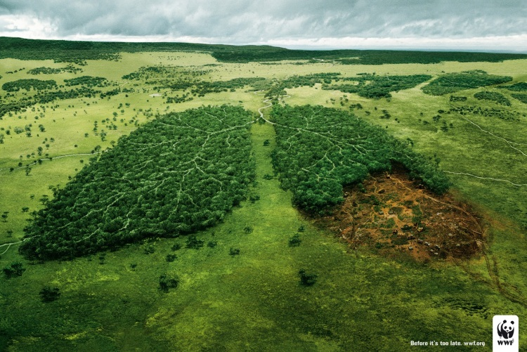 wwf-lungs-deforestation
