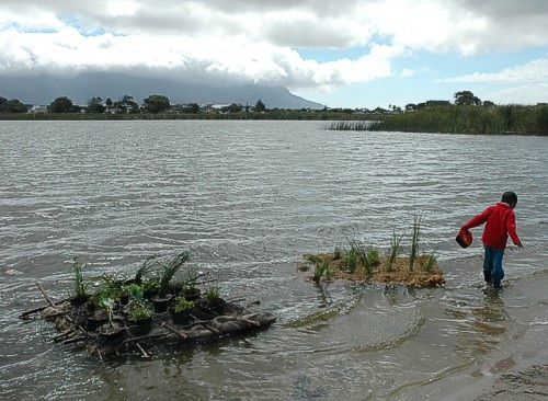 Two small floating wetlands supplied by the Princess Vlei Forum, WESSA and Riverside Nursery launched at Princess Vlei as part of World Water Day celebrations organised by the Forum. Image: Gavin Lawson (Zandvlei Trust).