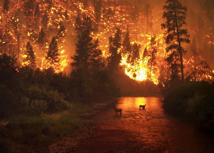 Wild fires in Alaska, US. Image: John McColgan, BLM Alaska Fire Service
