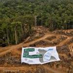 greenpeace palm oil deforestation -1