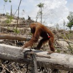 Nordic consumer giant commits to No Deforestation