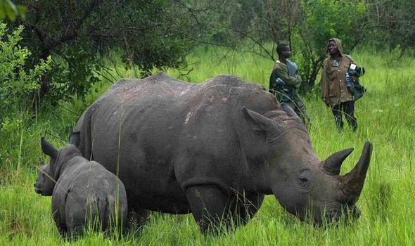 rhino sanctuary-2