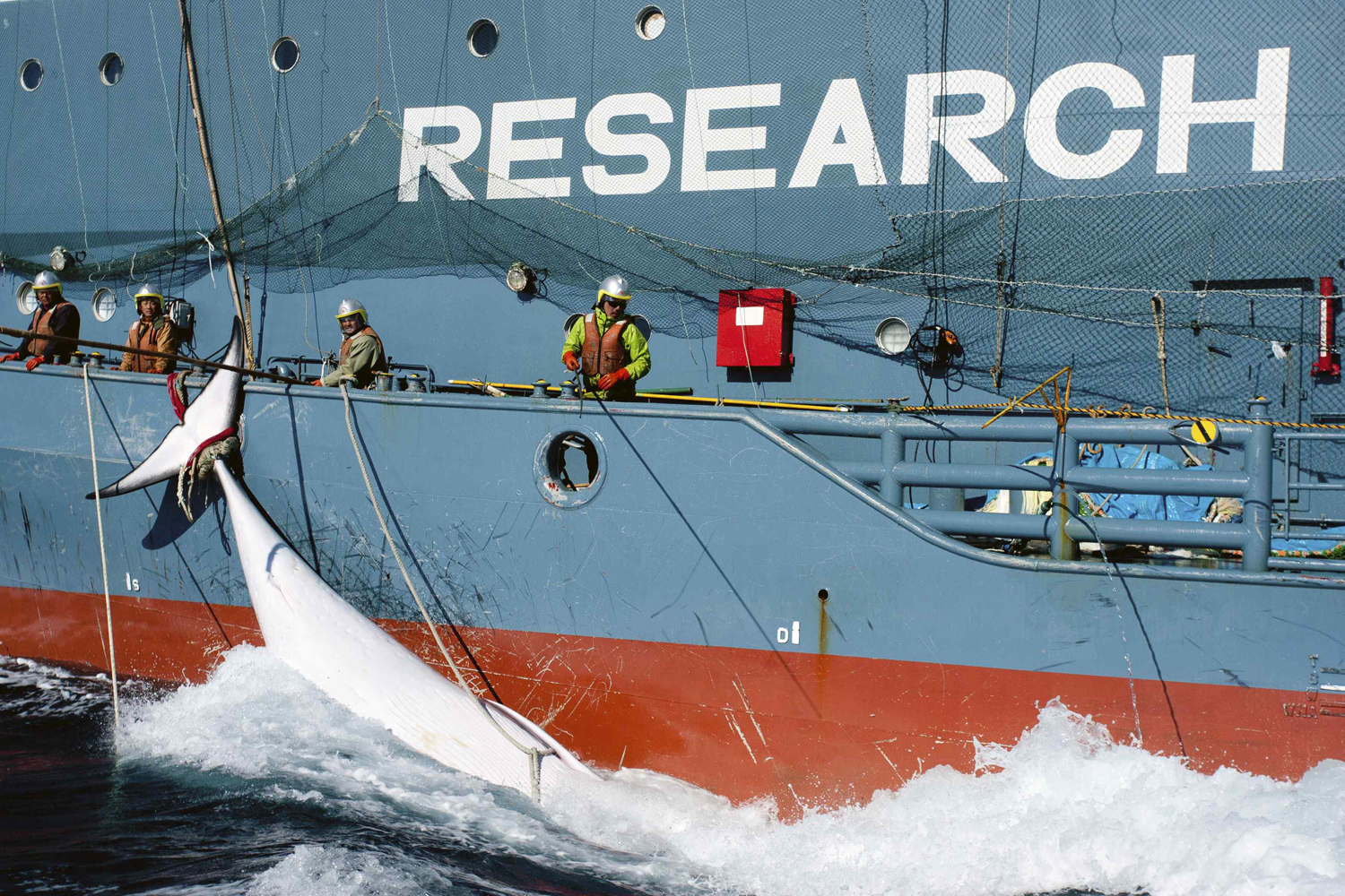 Japan confirms cancellation of whale hunt in response to court ruling