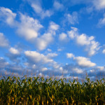 UN Climate Experts: new food crisis looming due to chemical farming