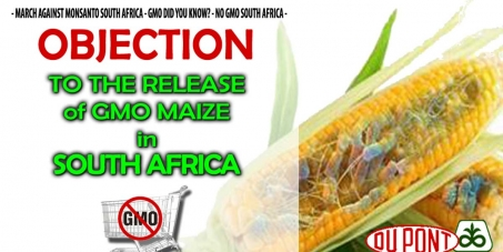 stop GM maize