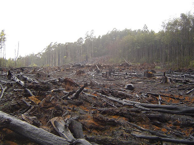 The exponential deforestation rate is a vicious 65,000 hectares a year