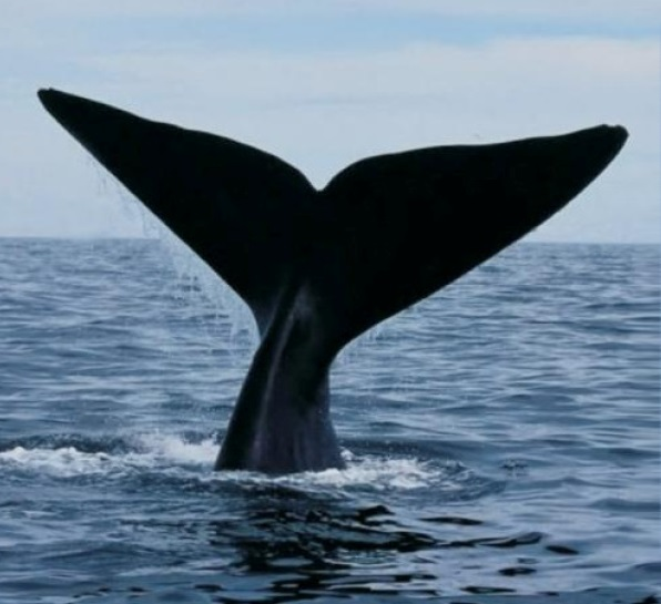 Cape Whale Coast Hope Spot Meeting
