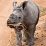Birthplace of rhino reservation under threat