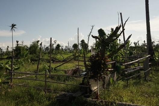 typhoon haiyan -5