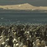 Algoa Bay chosen for new Hope Spot