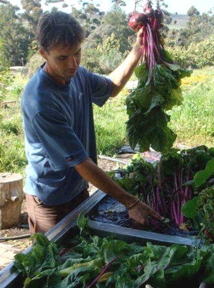 Camphill organic farmers market biodynamic2