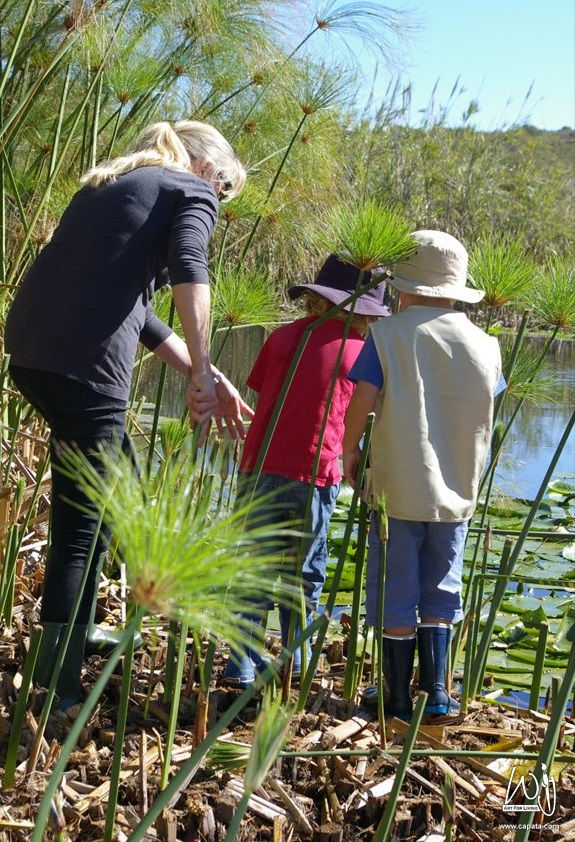 Pond Clearing at the Helderberg Nature Reserve2