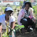 Over 450 fruit trees planted in Khayelitsha